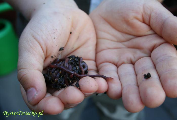 Ekologia dla dzieci w przedszkolu: dżdżownice są potrzebne środowisku