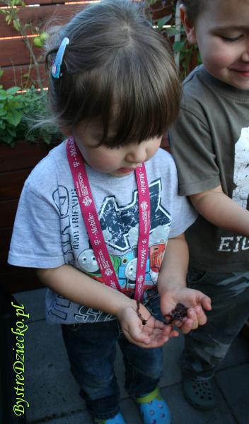 Edukacja ekologiczna dla dzieci w przedszkolu: dżdżownice są potrzebne środowisku