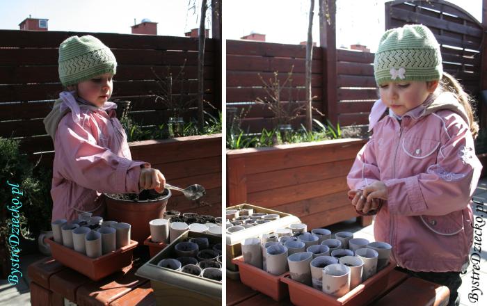 Sadzonki kwiatów balkonowych w rolkach po papierze toaletowym - Zdrowa dieta dla dzieci z roślinami balkonowymi