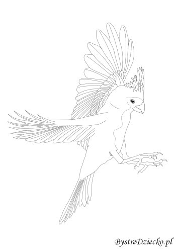 Bird coloring pages for kids, Anna Kubczak