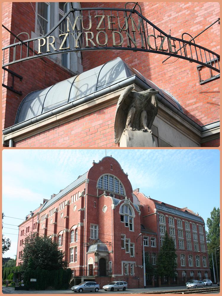 Zastanawiacie się, jakie oferuje Wrocław atrakcje dla dzieci? Poznajcie z nami Muzeum Przyrodnicze we Wrocławiu