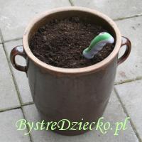 Kompost z domowego kompostownika - ekologia dla dzieci w praktyce