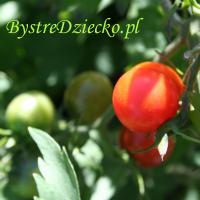 Zdrowa dieta dla dzieci z roślinami balkonowymi, Anna Kubczak