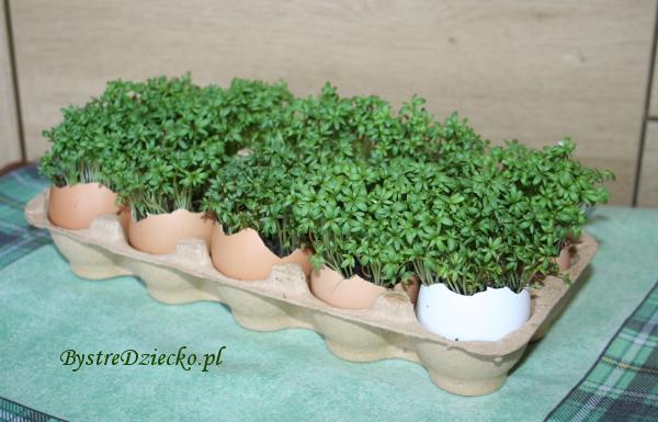 Rzeżucha w skorupce jajka - dekoracje wielkanocne w czasie zajęć plastycznych dla dzieci